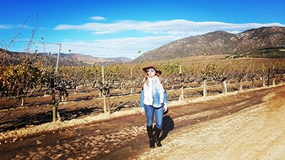 Valle de Guadalupe, Ruta del Vino, Ensenada, Baja California, México