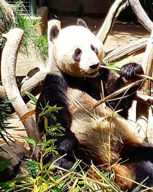 San Diego Zoo / Zoológico de San Diego